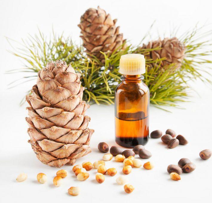 Кедровое масло: лечебные свойства и противопоказания, применение для лица, отзывы