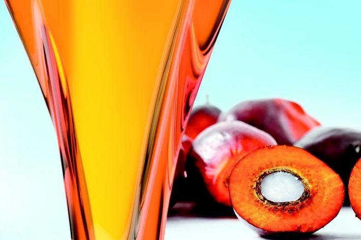 Пальмовое масло: польза и вред, как использовать в питании, косметологии, отличие от кокосового, противопоказания, отзывы