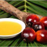 пальмовое масло в питании
