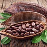 рецепты с какао маслом