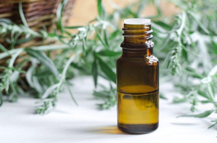 Обширное применение эфирного масла полыни