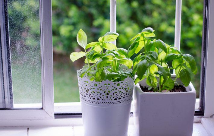что вырастить на подоконнике зимой из семян