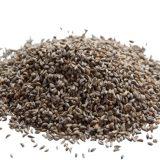 семена петрушки свойства