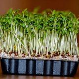 польза кресс салата