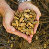 арахис польза и вред для мужчин