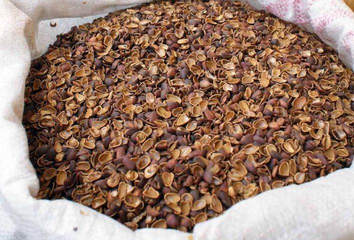 шелуха кедрового ореха