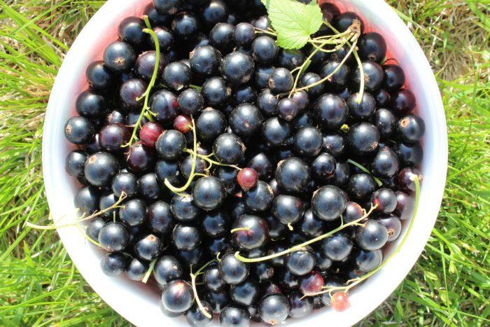 какие витамины в черной смородине